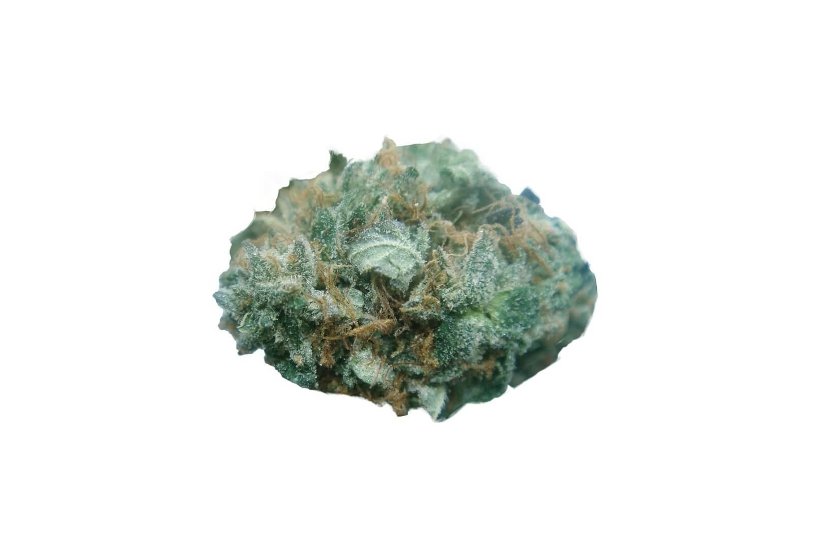 Chocolope (D-Line) strain photo 2