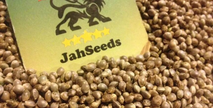 Jah Seeds picture