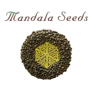 Mandala Seeds, AskGrowers