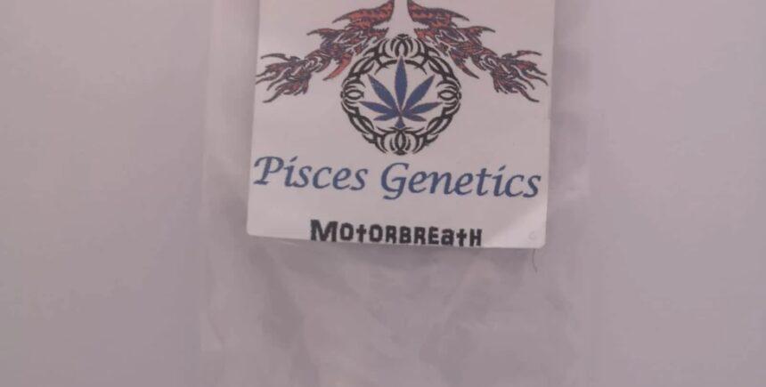 Pisces Genetics seeds