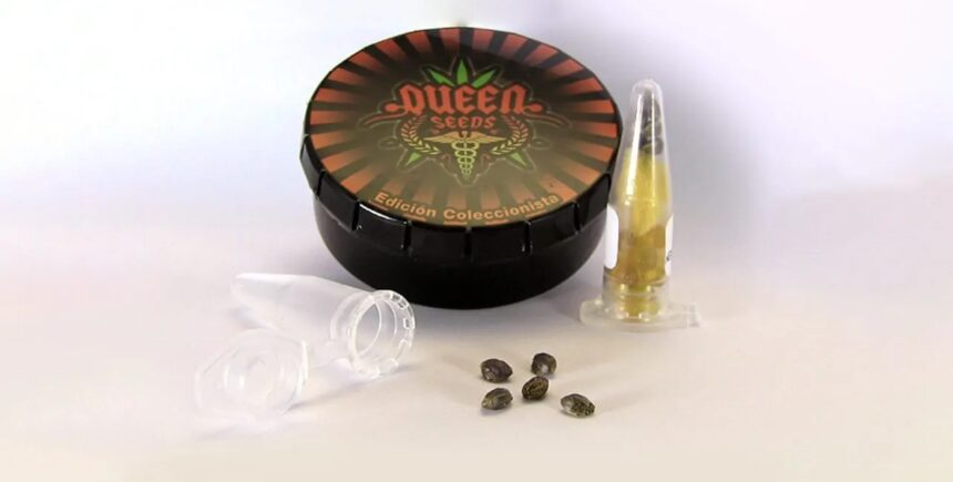 Queen Seeds product picture