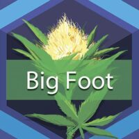 Big Foot Logo
