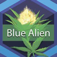 Blue Alien Logo