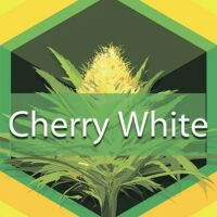 Cherry White Logo