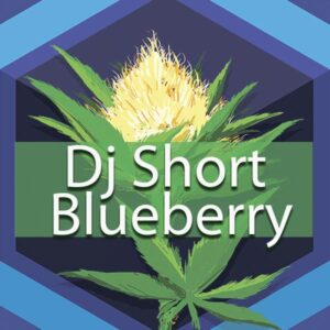 DJ Short Blueberry, AskGrowers