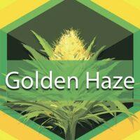 Golden Haze Logo