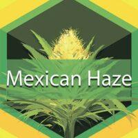 Mexican Haze Logo