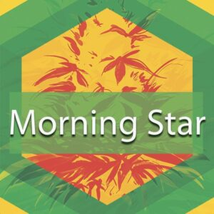 Morning Star, AskGrowers