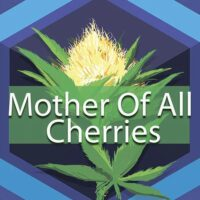Mother Of All Cherries Logo