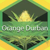 Orange Durban Logo
