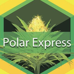 Polar Express, AskGrowers