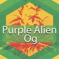 Purple Alien Og Logo