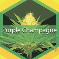 Purple Champagne Logo
