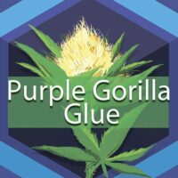 Purple Gorilla Glue Logo