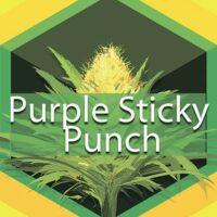 Purple Sticky Punch Logo