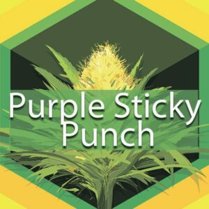 Purple Sticky Punch, AskGrowers