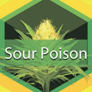 Sour Poison, AskGrowers