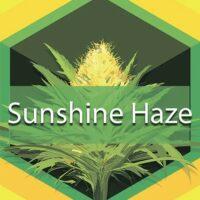 Sunshine Haze Logo