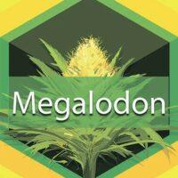 Megalodon Logo