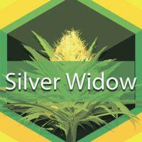 Silver Widow Logo