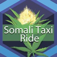 Somali Taxi Ride Logo
