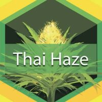 Thai Haze Logo