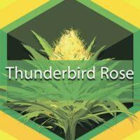 Thunderbird Rose Logo