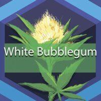White Bubblegum Logo
