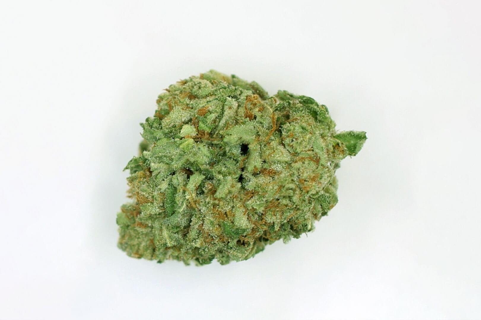Key Lime Pie (Key Lime GSC) strain photo 1