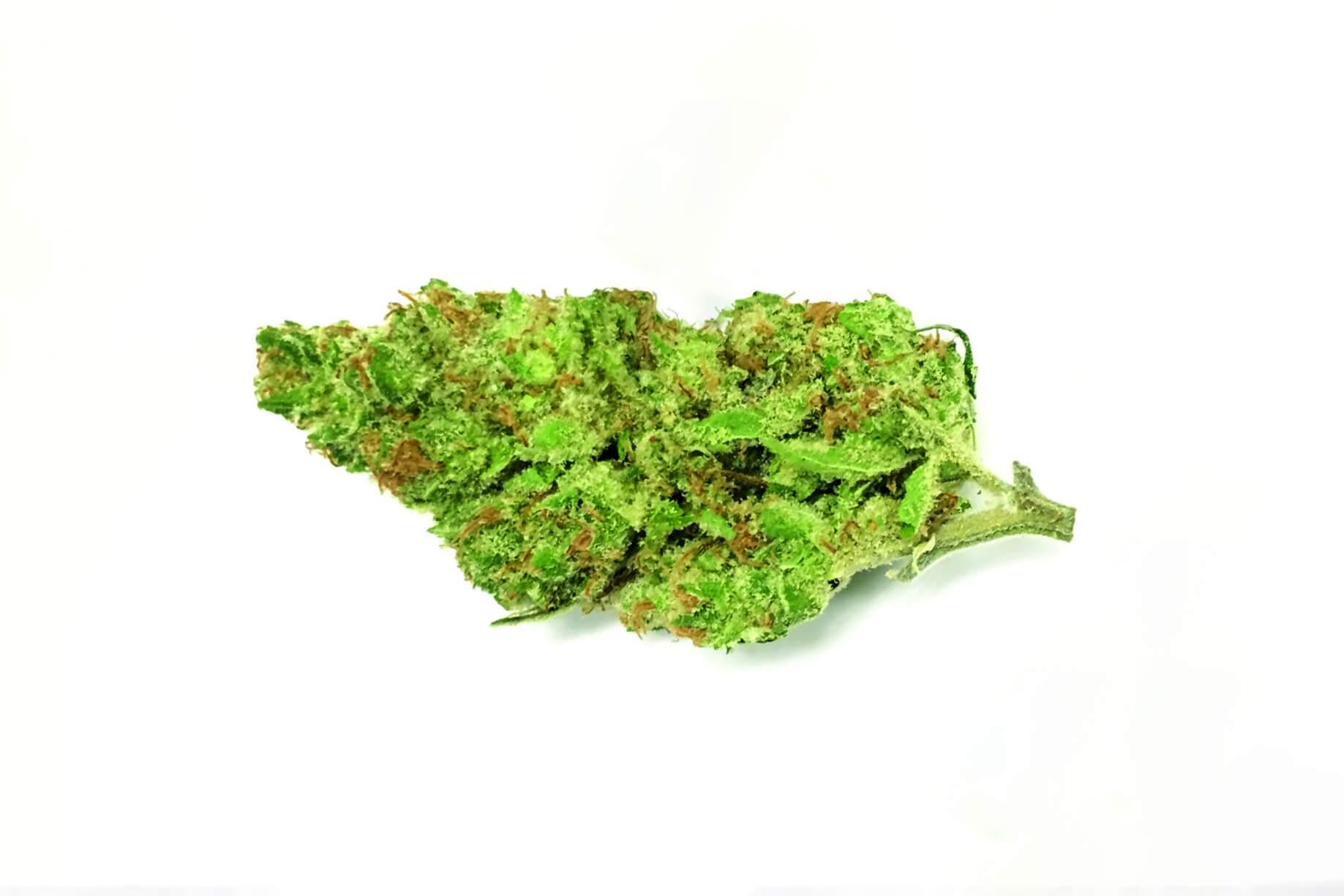Key Lime Pie (Key Lime GSC) strain photo 2