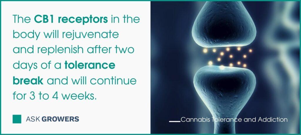 Marijuana Tolerance vs. Addiction | AskGrowers