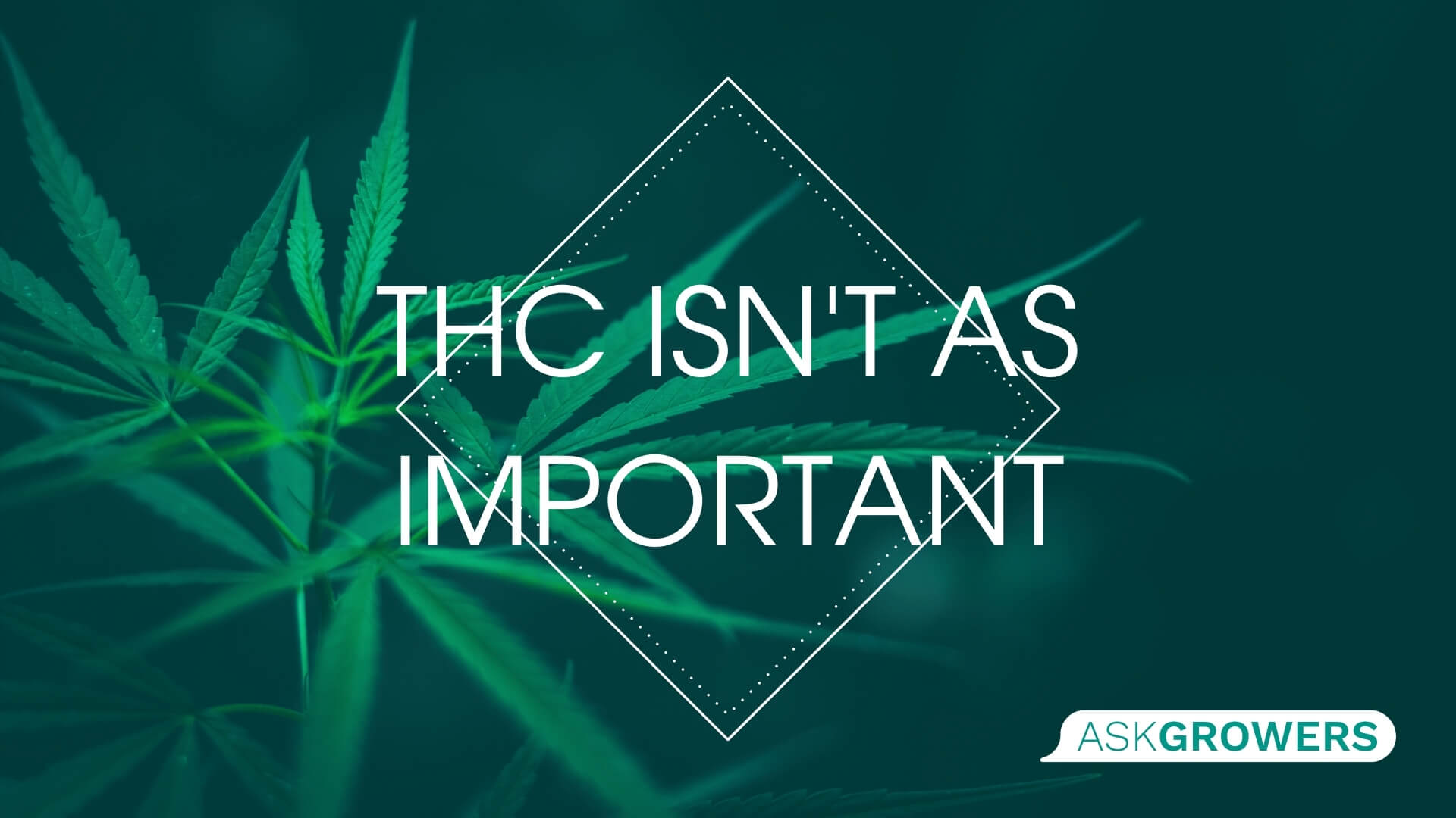 THC Isn't As Important, AskGrowers