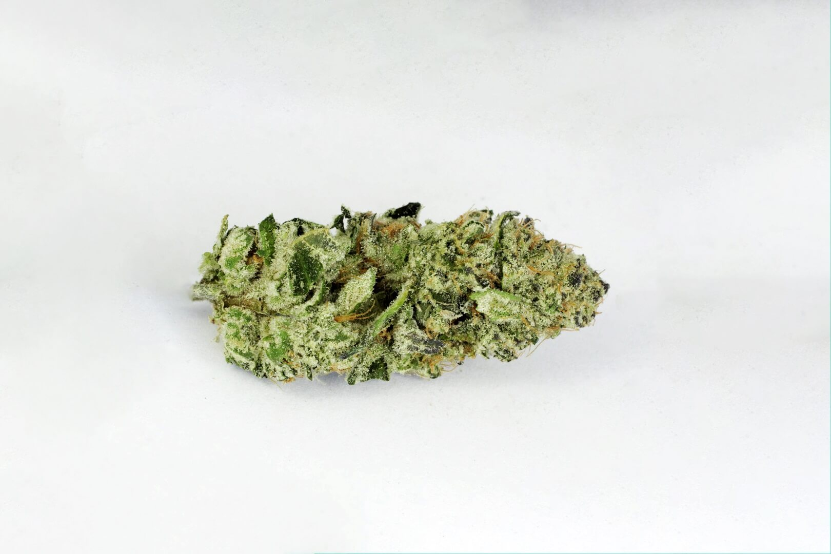 Girl Scout Cookies strain photo 2
