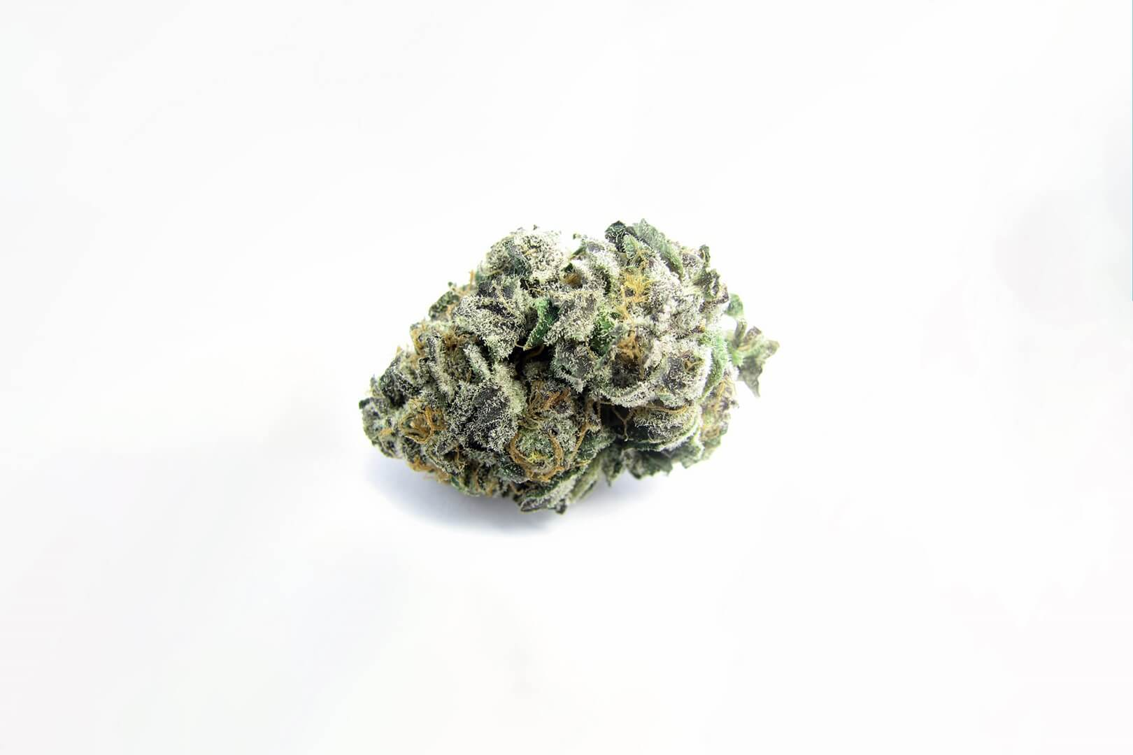 Girl Scout Cookies strain photo 3