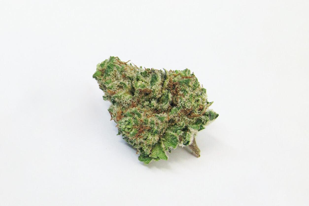 Mimosa strain photo 3