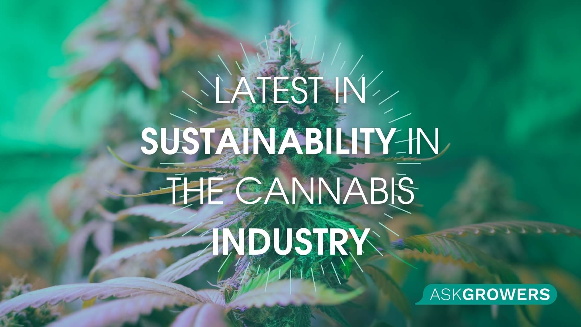 Latest in Sustainability in the Cannabis Industry: How the Cannabis Industry Stays Green, AskGrowers