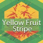 Yellow Fruit Stripe