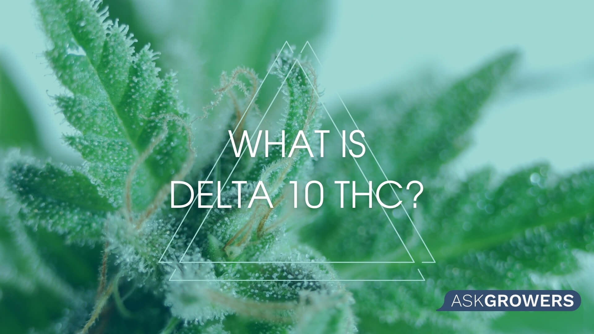 What You Need to Know About the New Tetrahydrocannabinol Delta-10, AskGrowers
